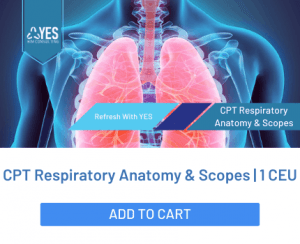 respiratory anatomy bronchoscopy cpt code